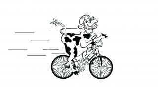 cycling cow